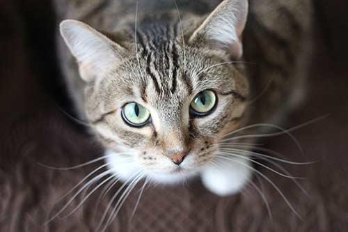 อาหารแมว-royal-canin-สำหรับแมว-1ขวบ