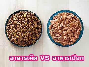 อาหารเปียก-กับอาหารเม็ด-สำหรับแมว