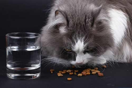 อาหารแมว-น้ำ-การทานน้ำของแมว