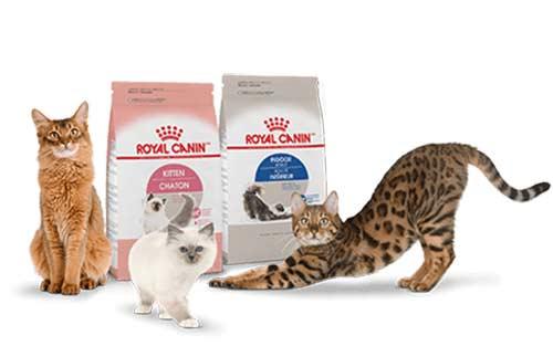 อาหารแมว-Royal-canin-อาหารแมวยี่ห้อไหนดี
