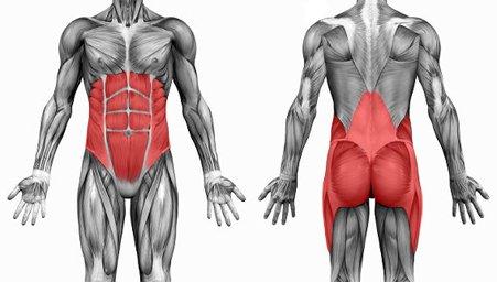 Core Muscles กล้ามเนื้อแกนกลางลำตัว