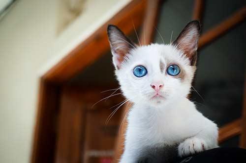 purinaone-อาหารแมว-kitten